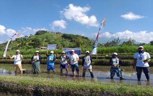 Genjot Produktivitas, Pupuk Kaltim Gelar Demplot Padi di Peladung Bali