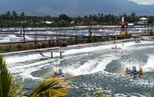 Setelah Filipina dan Vietnam, Wabah AHPND Serang Tambak Udang di Bali