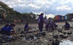 Malu Tamu Tanya Kerusakan Mangrove, Karang Taruna Pemuteran Menanam