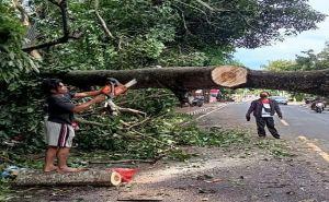 BMKG Ingatkan Potensi Hujan Petir dan Angin Kencang