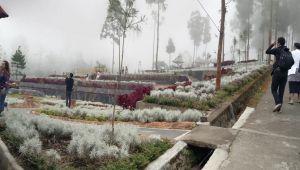 Habiskan Rp 600 Juta, Ini Penampakan Taman Edelweis Pasca Penataan