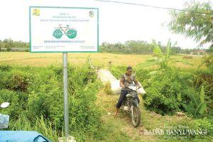 Harga Gabah Stabil, Stok Beras di Banyuwangi Aman