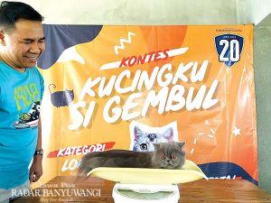 Kontes Si Gembul Kucingku Bersifat Fun and Photogenic