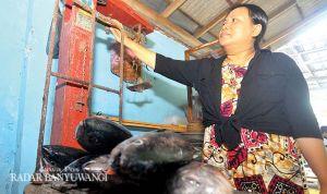 Angin Kencang Jadi Berkah, Ikan Tuna Merajarela di Selat Bali