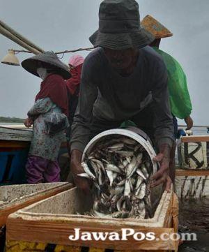 Nelayan Grajagan Panen Tangkapan Ikan Lemuru