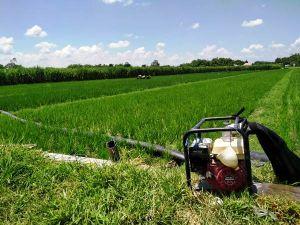 Disperta Jombang Didesak Perbaiki Tata Kelola Irigasi Pertanian