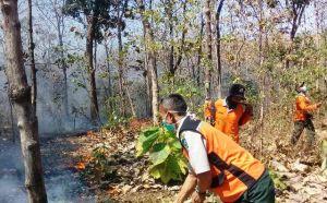 Puluhan Hektare Hutan Dilalap Api