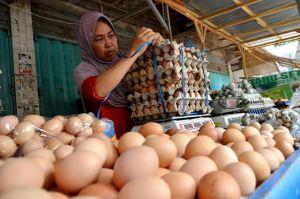 Mahalnya Telur Diduga karena Faktor Ini