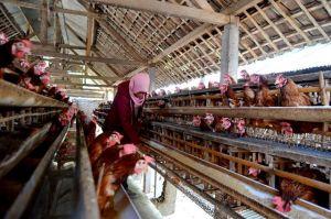 Telur Bercangkang Tipis Dijual Lebih Murah