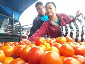 Harga Tomat di Sejumlah Pasar Ini Anjlok, Ini Sebabnya