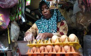 Stok Menumpuk, Pembelinya Sedikit, Harga Telur Turun