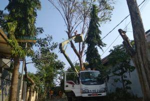 DLH Pangkas Puluhan Pohon yang Rawan Tumbang