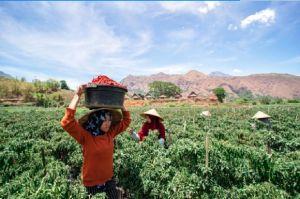 Salurkan KUR Pertanian Rp 26,5 Triliun Dalam 6 Bulan, Ini Strategi BRI