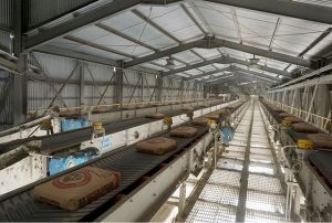 Produk Ramah Lingkungan, Bangunan Kokoh hingga 100 Tahun