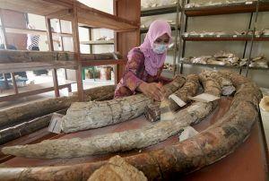 Tiga Negara bakal Teliti Fosil di Situs Patiayam