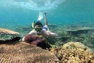 Lama Tak Diselami, Mudah Temukan Nemo