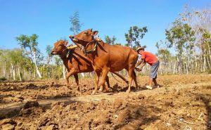 Mekanisasi Pertanian Bisa Tarik Generasi Muda