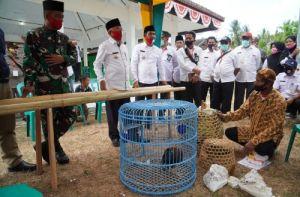 Ayam Bekisar Maskot Pulau Kangean, Ini Harapan Camat Kangayan