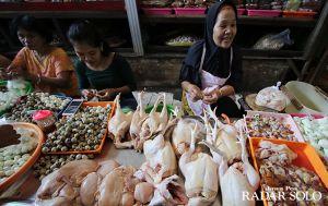 Over Suplai, Harga Ayam Turun