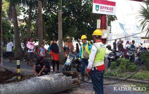 Balita yang Tertimpa Pohon Tumbang di CFD Meninggal