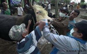 Jateng Batasi Keluar Masuk Hewan Ternak, Waspadai Penyakit Menular