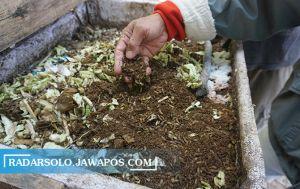 Mengatasi Masalah Sampah dengan Cara Budidaya Maggot