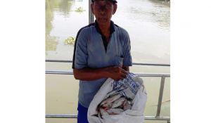Kali Surabaya Tercemar, Ikan Mati Masal di Tiga Desa di Driyorejo