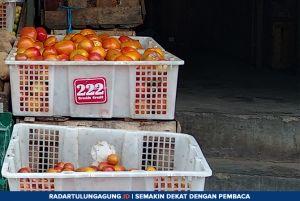 Segini Kenaikan Harga Tomat Sayur dan Tomat Buah