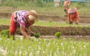 Tingkatkan SDM,  15 Warga Badung Magang ke Jepang