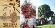 Hadiah Keluarga Lie Abad 18, Pohon Pertama masih Ada di Puri Payangan