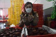 Paling Tinggi, Ekspor ke Thailand Meningkat 25,24 Persen