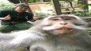 Monkey Forest Belum Dibuka Maksimal
