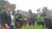 Ketua TP-PKK Semangati Petani Sayur Batusesa