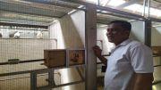 Penjualan Burung Jalak Bali Menurun, Ekspor Terkendala Izin