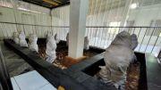 Bau Wangi, Salam Misterius Kerap Muncul di Makam Karang Rupit