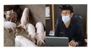 Pasokan Langka Pasca Virus ASF, Harga Daging Babi Melambung