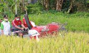 Wabup Kasta Panen Perdana Padi M70D di Selisihan