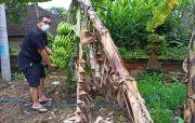 Usai Gladi Pelantikan Sanjaya Tinjau Renovasi Rumjab