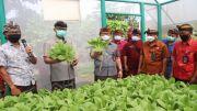 Adi Arnawa Dorong Hidroponik Jadi Program untuk Masyarakat