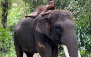 Model Rusia Unggah Video Bugil Naik Gajah di Taro, tapi Tak Dihukum