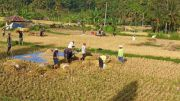 Sanggup Pertahankan Lahan Pertanian, Petani Akan Diberi Reward