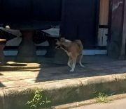 Anjing Dicurigai Rabies Gigit Empat Warga Tihingan