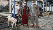 Bali United Tiadakan Tradisi Sembelih Hewan, Sumbangkan 5 Ekor Kambing
