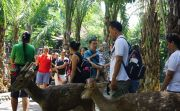Habiskan Libur Lebaran, Wisatawan Domestik Padati Kebun Binatang