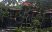 Pohon Mete Jumbo Tumbang Timpa Pelinggih Meru