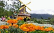 Soal Pungutan Taman Edelweis Oleh Pemkab, Pengelola Sebut Baru Wacana