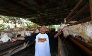 Suplai Daging Global Qurban, ACT Kelola Ribuan Hewan Kurban Terbaik