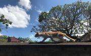 Kemarau Bakal Berakhir, BMKG Prediksi Bali Diguyur Hujan Bulan Depan