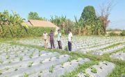 Nilai Jual Menjanjikan, Petani Buleleng Didorong Tanam Cabai Rawit