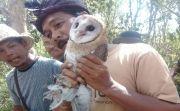 Dorong Pertanian Organik, Petani Klungkung Diberi Bantuan Burung Hantu